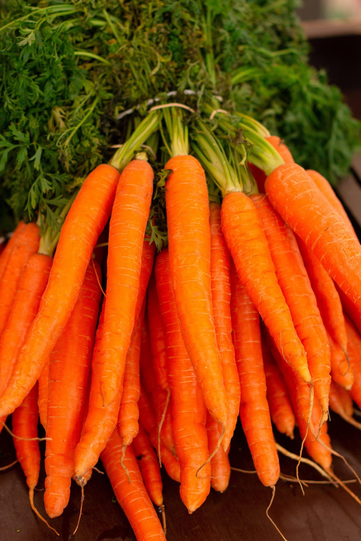hvornår planter man gulerødder